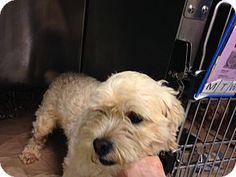 New Jersey, NJ - Maltese/Schnauzer (Miniature) Mix. Meet Bordentown NJ - Floyd, a dog for adoption. http://www.adoptapet.com/pet/11732424-new-jersey-new-jersey-maltese-mix
