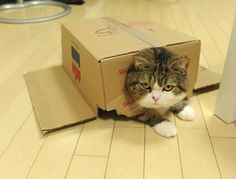 =^.^=  OKay,  this is NOT funny.  I'm not a cat in the box toy.  HELP!