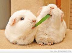 So cute !! :)