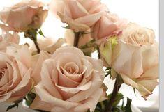 Blush Wedding Flowers, Peach Flowers, Blush Roses, Pink Roses, Floral Wedding, Wedding Bouquets, Blush Pink, Beautiful Roses, Beautiful Flowers
