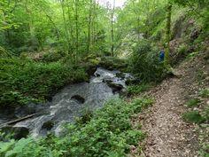 Rivière au bord d'un sentier de #randonnee dans le Parc naturel régional du Haut-Morvan #Lormes