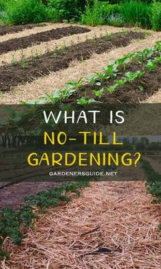 Cultivating or otherwise known as tilling your garden soil is an old age practice of Container Plants, Container Gardening, No Till Garden, Dubai Miracle Garden, Dig Gardens, Garden Route, Garden Soil, Garden Planting Layout, Garden Layouts