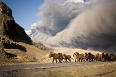 Horses are herded away from the Eyjafjallajökull volcano's ash plume on April 17, 2010.