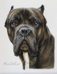 My sweet Enzo Pastel Art, Sweet, Dogs, Animals, Candy, Animales, Animaux, Pet Dogs, Doggies