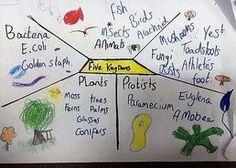 Literacy ideas in Science