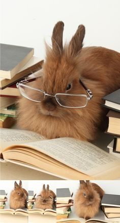 reading rabbit-well this is just straight up adorable!