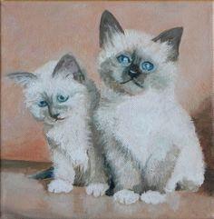 Twee heilige Birmaantjes, 6 weken oud (Two holy Birmese cats, 6 weeks old)