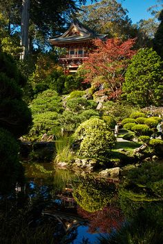 I love the Japanese Tea Garden in Golden Gate Park, SF.  I come here each summer when walking around the park.