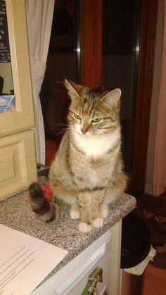 Roxy Cat | Pawshake Birkenhead
