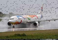 A330 & other birds.