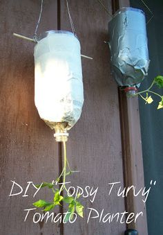 Growing Tomatoes Upside Down How to make your own Topsy Turvy Tomato planter, DIY Upside Down Tomato Planter With Empty Soda Bottle, space saving garden
