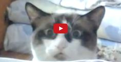 You Know Your Cat Is A Total Creep When…
