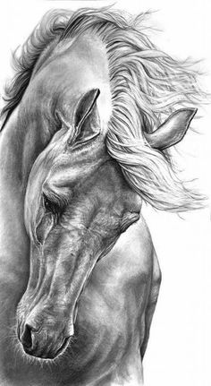 Drawing Pencil Portraits - Hourse Discover The Secrets Of Drawing Realistic Pencil Portraits Horse Drawings, Animal Drawings, Art Drawings, Sketches Of Horses, Pencil Sketches Of Animals, Drawing Animals, Drawing Art, Cartoon Drawings, Painted Horses
