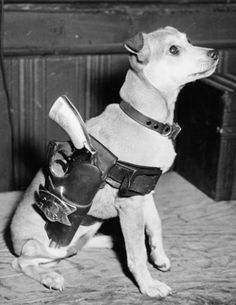 Captain Louis Capparelli of Maxwell Street Police Station's dog, Lassie. Chicago 1944