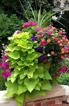 85 Fresh and Easy Summer Container Garden Flowers Ideas Decoradeas is part of Container gardening flowers Enjoy nonstop color all season long with these container gardening ideas and plant suggesti - Lawn And Garden, Garden Pots, Roses Garden, Summer Garden, Potted Garden, Garden Shrubs, Balcony Garden, Potted Plants, Beautiful Gardens