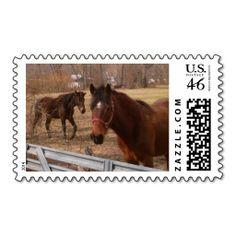 Brown Horses Postage Stamp