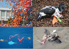 Balloons kill wildlife. Stop balloon releases!