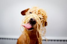 Dog with noodles