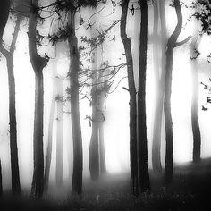 White Light by Hengki Koentjoro