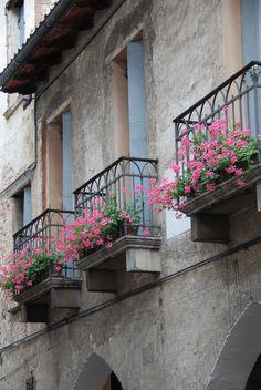 Balcon con flores. Desde chica me gustó tener mi balcón lleno de geranios y malvones. Los plantaba yo misma. Era el único balcón de la cuadra, con flores.