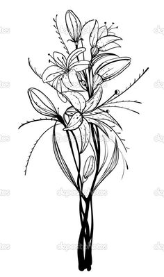 lily flowers drawings - Google Search