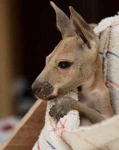 Les naissances dans un zoo, c'est toujours un événement ! Retrouvez les plus adorables et exceptionnels animaux nouveaux-nés des zoos de France.