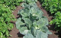 vegetable-gardens