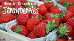 What's the best way of preserving the early summer bounty of strawberries for winter? Dehydrate them! + a quick tip to make hulling strawberries easier!