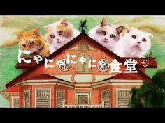 au WALLET「にゃにゃにゃにゃ食堂」 史上初!ネコ語ドラマ(ヒューにゃんドラマ)