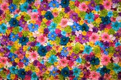 istanbul,photooftheday-Inovative flower wall 💐By: Nick harrislikeforlike istanbul photooftheday izmir naturelover photos norway mol Exotic Flowers, Colorful Flowers, Spring Flowers, Beautiful Flowers, Small Flowers, Wild Flowers, Flower Backgrounds, Floral Wallpapers, Cellphone Wallpaper