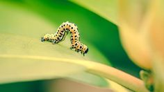 10 Most Destructive Garden Insects And How To Get Rid Of Them ...