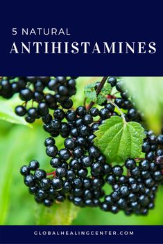 Scientists Verify Elderberry Beats the Flu, Prevents Colds & Strengthens Immunity - Better Life Media Elderberry Recipes, Elderberry Syrup, Home Remedies, Natural Remedies, Natural Antihistamine, Natural Allergy Relief, Cold And Flu Relief, Seasonal Allergies, Nutritional Supplements