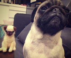 巴哥和她的羊毛氈朋友