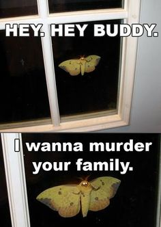 ALL MOTHS HAVE THIS MISSION.