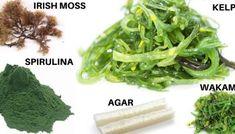 Jak schudnąć przy niedoczynności tarczycy? Dieta + naturalne leczenie – Motywator Dietetyczny Irish Moss, Spirulina, Seaweed Salad, Ethnic Recipes, Food, Essen, Meals, Yemek, Eten