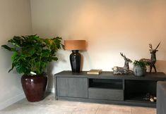 Beste afbeeldingen van in de schaduw in house plants