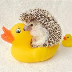 Rubber ducky rider