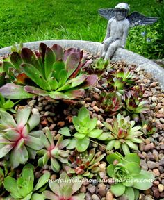 Repurposed Birdbath Succulent Planter