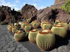 hermoso jardín de cactus con piedra volcanica