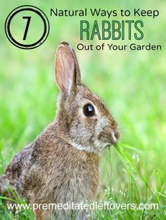7 Natural Ways to Repel Rabbits from Your Garden- Keep rabbits out of your garden without using chemicals or traps. These strategies are completely natural.