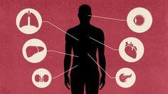 Všimli jste si, že stále více a více lidí, dokonce i mladých, podléhají chronickým onemocněním, rakovině či autoimunitním chorobám? Naše tělo je sice za optimálních okolností dokonalé, ale má i svá slabá místa.