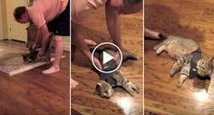 A Hilariante Reação De Um Gato Ao Vestir Uma Camisola De Relaxamento http://www.funco.biz/hilariante-reacao-um-gato-ao-vestir-camisola-relaxamento/
