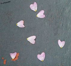Love Hearts by Steve Taylor (Photography), via Flickr