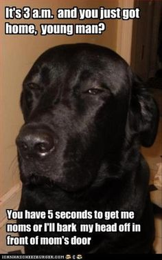 This is definitely my black lab.