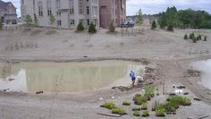 Stormwater pond planting
