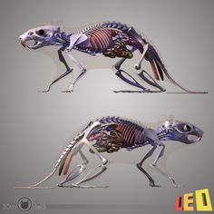 anatomy rat 3d model | Rats | Pinterest | Rats, Anatomy and Animal ...