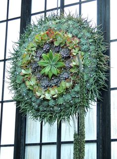 Succulent Christmas Wreath with lights- Longwood Gardens- Pa. I've been to Longwood, it's beautiful!
