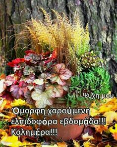 Good Morning, Greek, Flowers, Plants, Beautiful, Buen Dia, Bonjour, Greek Language, Florals