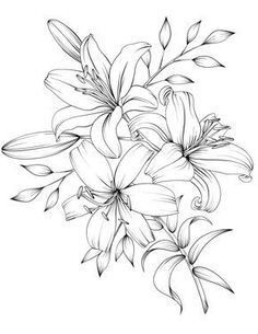 Adult Coloring Book Botanicum Flowers Digital Coloring 15 pages Printable x 11 Lilies Drawing, Floral Drawing, Lilly Flower Drawing, Flower Design Drawing, Lily Flower Tattoos, Flower Tattoo Drawings, Flower Outline Tattoo, Pencil Drawings Of Flowers, Adult Coloring