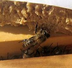Making pollen patties and other beekeeping tips.